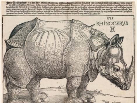 The Rhinoceros, by Albrecht Dürer, 1515